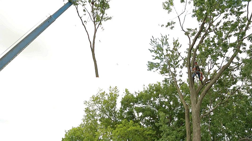 oaklandtreeservicecranelift
